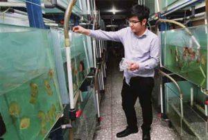 Kisah Inspiratif Nicholas Kurniawan, Eksportir Ikan Hias Sukses Termuda di Indonesia
